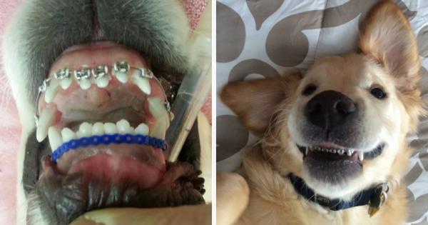 Ο σκύλος τους γεννήθηκε με στραβά δόντια και ο κτηνίατρος του φόρεσε σιδεράκια. Δείτε την εκπληκτική του μεταμόρφωση!
