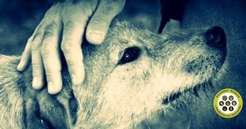 ευθανασία ζώων αδέσποτα ζώα