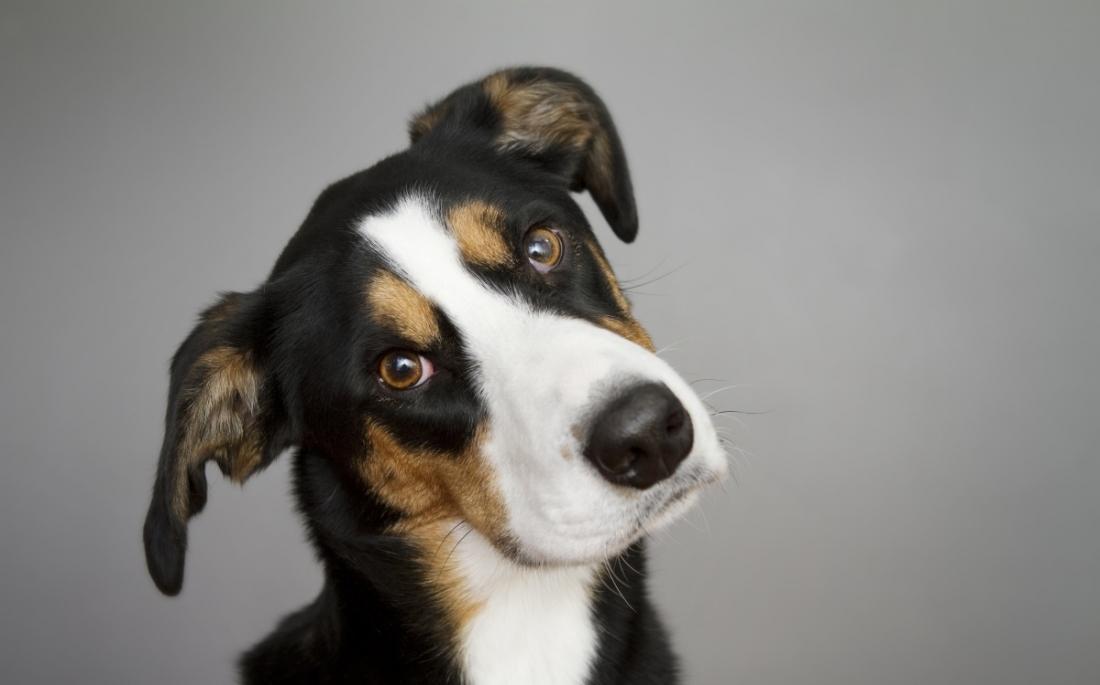 Σκύλος Βίντεο