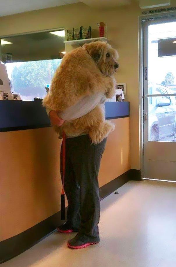 Σκύλος ιδιοκτήτες