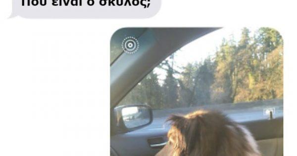 Αυτός ο 20χρονος φοιτητής λατρεύει τόσο πολύ τον σκύλο του που τον παίρνει Κρυφά μαζί του στο πανεπιστήμιο!