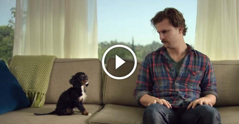 υιοθεσία σκύλων κουτάβι