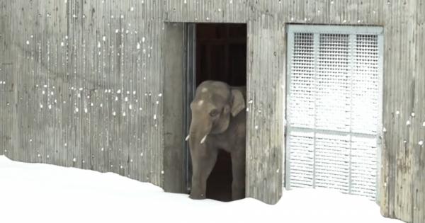 Το χιόνι σκέπασε τον ζωολογικό κήπο. Όταν ένας υπάλληλος πήγε να ελέγξει τα ζώα, Πάγωσε με αυτό που αντίκρισε!