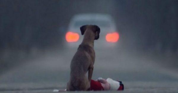 Σκεφτείτε το καλά πριν εγκαταλείψετε ένα ζώο – Δείτε το βίντεο και θα ανατριχιάσετε!
