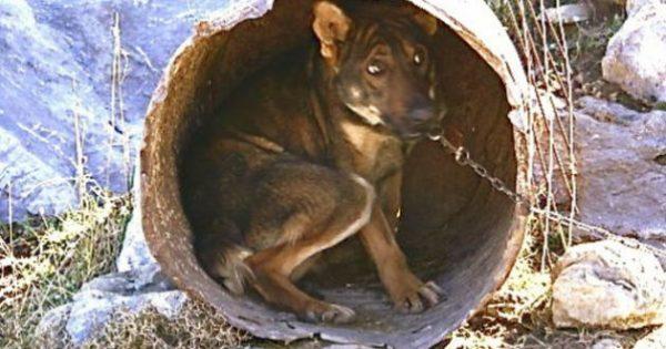 Τι κάνουμε όταν δούμε ζώα να κακοποιούνται