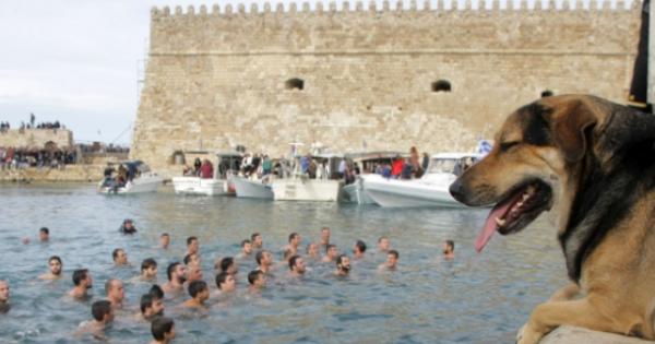 Τετράποδος βουτηχτής στην Κρήτη – Γνωστό αδέσποτο του Ηρακλείου «έπεσε για το Σταυρό» (εικόνες)