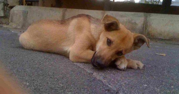 Ο Δήμος Αιγάλεω πέταξε τα 3 σκυλόσπιτα που προστάτευαν αδέσποτα γιατί τα χαρακτήρισε «αυθαίρετες κατασκευές»