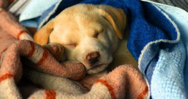 Όταν κάνει κρύο τα κουτάβια αναζητούν την κρυψώνα μιας… κουβέρτας