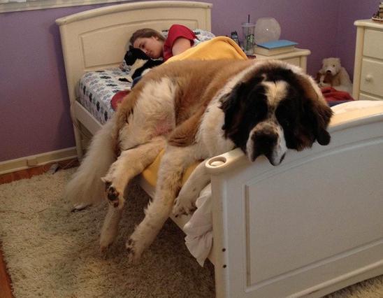 Σκύλος αϋπνίες