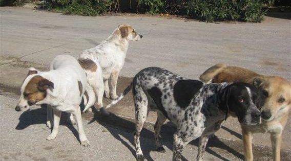 Σύλληψη 54χρονου που τραυμάτισε αδέσποτο σκύλο