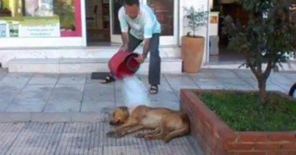 Αίσχος: Αθώος ο φαρμακοποιός που είχε αδειάσει κουβά με βρωμόνερα και χλωρίνη σε αδέσποτο στη Θεσσαλονίκη