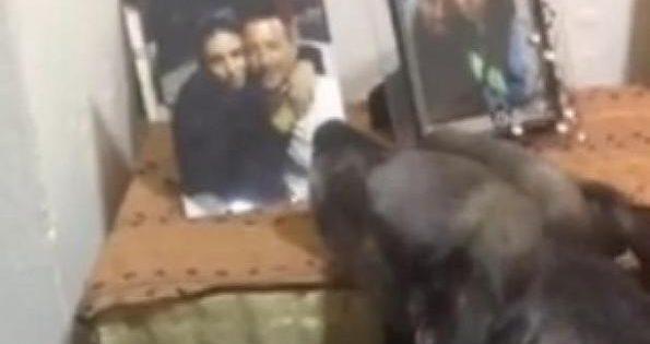 Ραγίζει καρδιές – Σκύλος στην Καβάλα θρηνεί κάθε μέρα μπροστά στη φωτογραφία των νεκρών κηδεμόνων του!