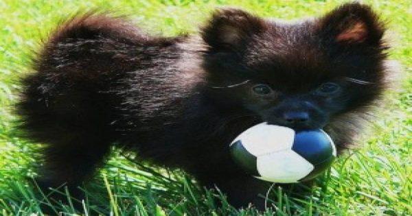 Ο Sue είναι ο πανέξυπνος σκύλος που παίζει μπάλα με τους περαστικούς (βίντεο)