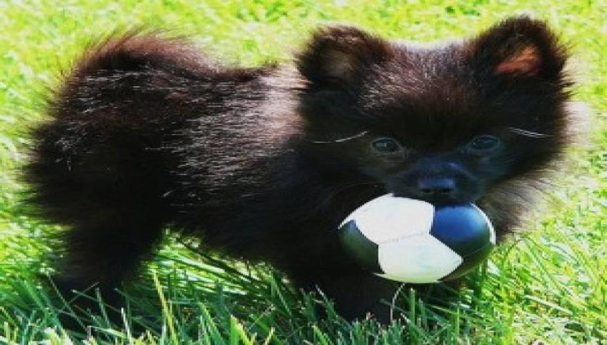 Σκύλος μπάλα Βίντεο