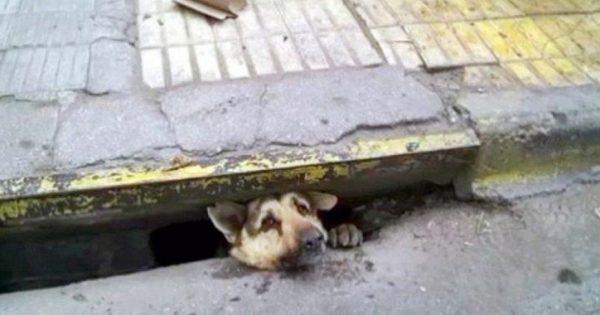 Η δραματική διάσωση σκύλου που παγιδεύτηκε σε φρεάτιο (video)