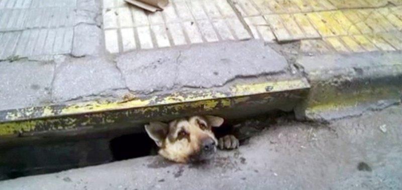 διάσωση σκύλου Βίντεο