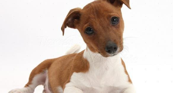 Ο σκύλος σου δεν είναι ημίαιμος! Οι καινούριες ράτσες σκύλων που σίγουρα δεν ήξερες (εικόνες)