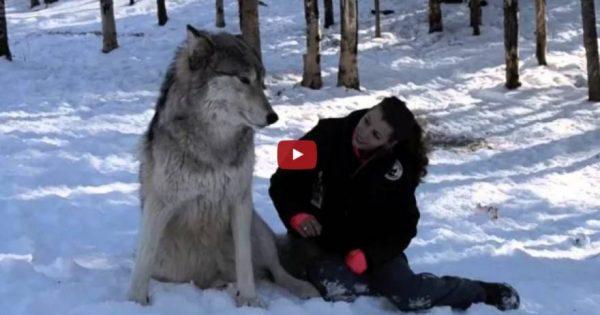 Aναπάντεχη φιλία ενός άγριου ζώου και ενός ανθρώπου (βίντεο)