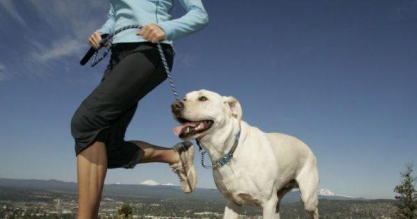 Οι κατάλληλες ράτσες σκύλου για αφεντικά που… τρέχουν!
