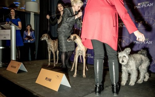 Αυτές είναι οι τρεις νέες φυλές σκύλων που αναγνωρίστηκαν επισήμως στις ΗΠΑ
