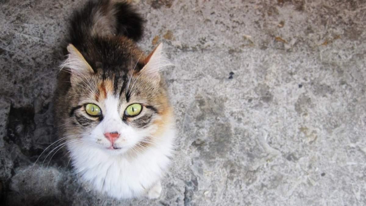 151707-cat