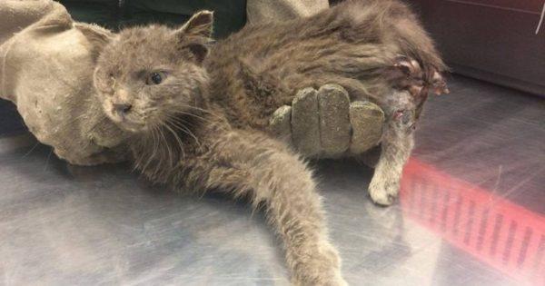 Βρήκαν τον γάτο να περιφέρεται σαν ζωντανός σκελετός με σάπιο πόδι στο Κορωπί Αττικής