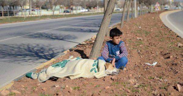 Προσφυγόπουλο από τη Συρία παρέμεινε δίπλα σε τραυματισμένη αδέσποτη σκυλίτσα μέχρι να φθάσει βοήθεια