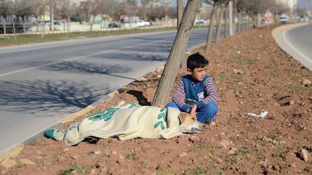 φροντίδα αδέσποτων Συρία αδέσποτο