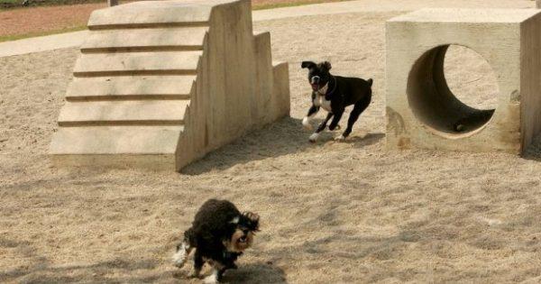 Ίλιον: Ο δήμος ετοιμάζει δύο πάρκα για σκύλους με ειδικά όργανα γυμναστικής