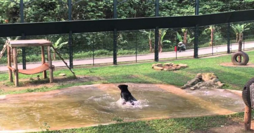 αρκούδα Απελευθέρωση