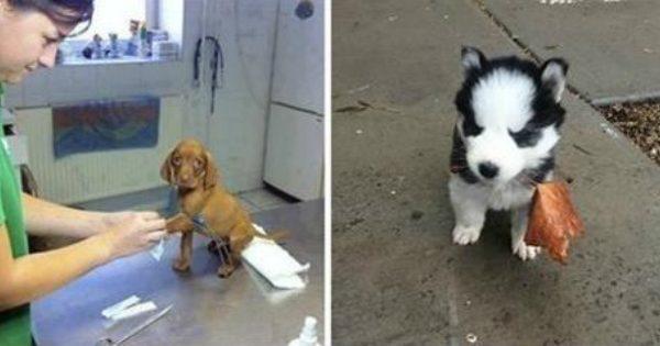 21 Αξιολάτρευτα Κουταβάκια που μόλις τα δείτε θα Θελήσετε κι εσείς να Υιοθετήσετε το Δικό σας Σκυλάκι!