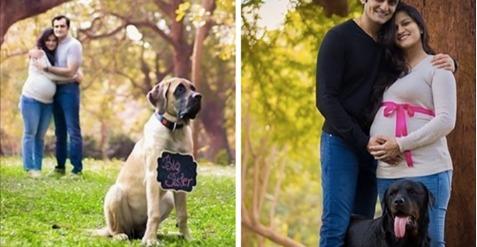 Λόγω της Εγκυμοσύνης, όλοι της έλεγαν να απομακρύνει τα Σκυλιά της από το Σπίτι. Η Απάντησή της; Η Καλύτερη!