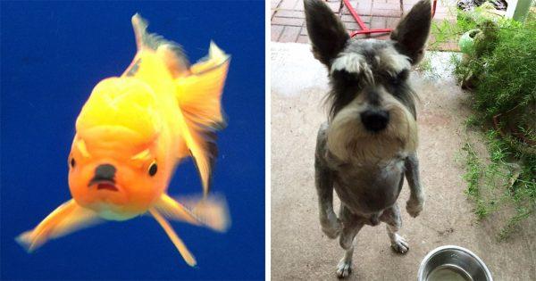 40 πολύ νευριασμένα ζώα που κανείς δεν θα ήθελε να συναντήσει