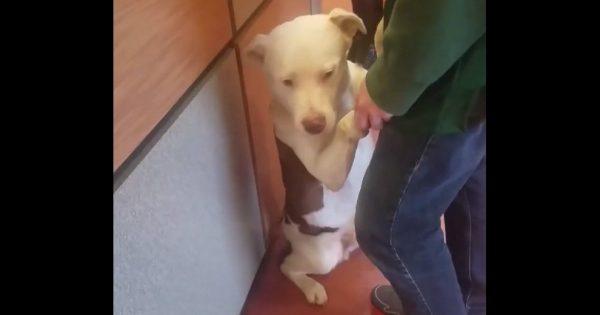 Απελπισμένο Σκυλί δεν Αντέχει να Μένει στο Καταφύγιο Ζώων. Μόλις είδε μια Κοπέλα να Ψάχνει για Κατοικίδιο, έκανε ΚΑΤΙ απίστευτο!