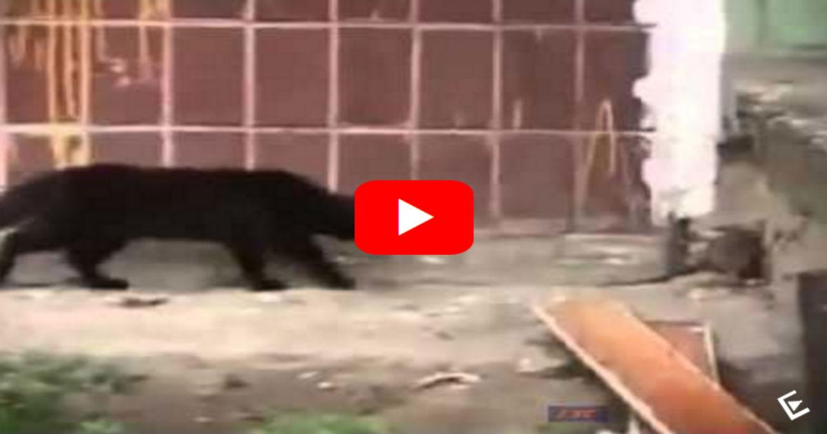 ζώα Βίντεο