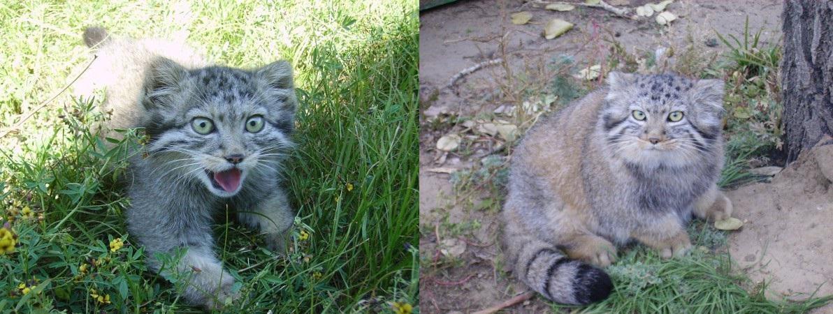 αδέσποτα γατάκια