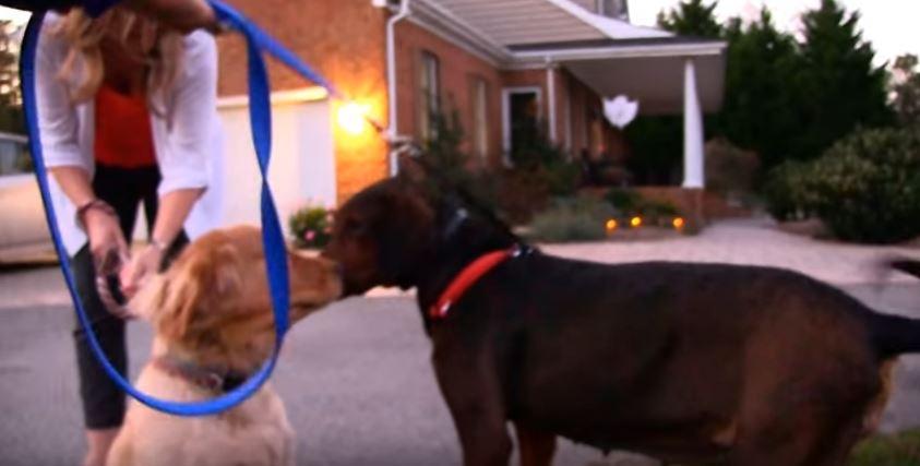 Σκύλος κακοποίηση σκύλων