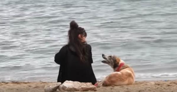 Πλησίασε ένα αδέσποτο σκυλί στην παραλία και το οδήγησε στο αμάξι της. Η συνέχεια; Θα σας κάνει να δακρύσετε!