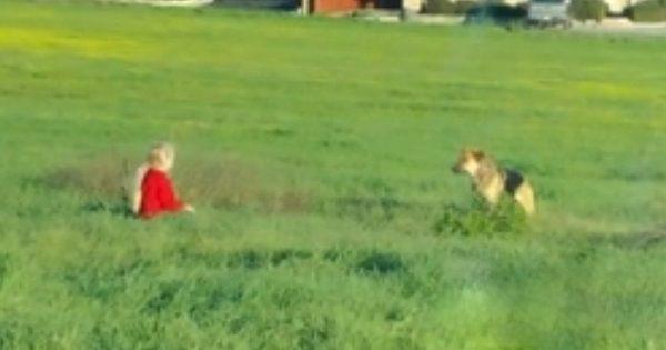 Για 2 Μήνες, κανείς δεν μπορούσε να Πλησιάσει αυτόν τον Αδέσποτο Σκύλο. Τότε ένα 6χρονο Κοριτσάκι έκανε το Αδιανόητο!