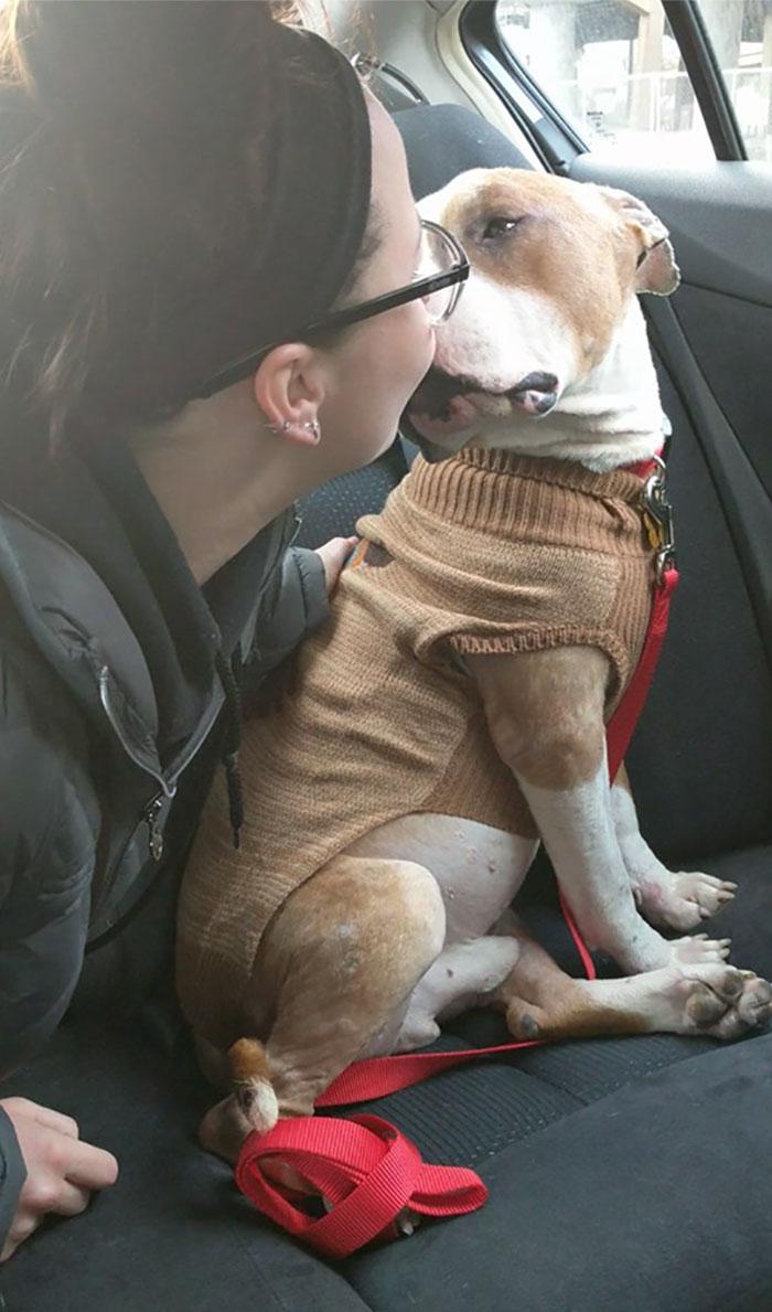 πιτ μπουλ κακοποίηση σκύλων