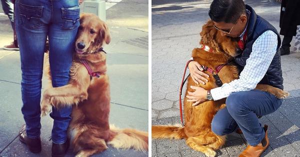 Αυτό το σκυλάκι είναι εθισμένο στις αγκαλιές και αγκαλιάζει όποιον το πλησιάζει. Αξιολάτρευτο!