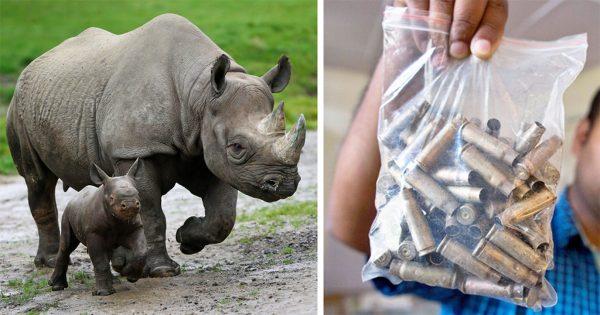 Πάρκο προστασίας ρινόκερων πυροβολεί και σκοτώνει τους λαθροκυνηγούς