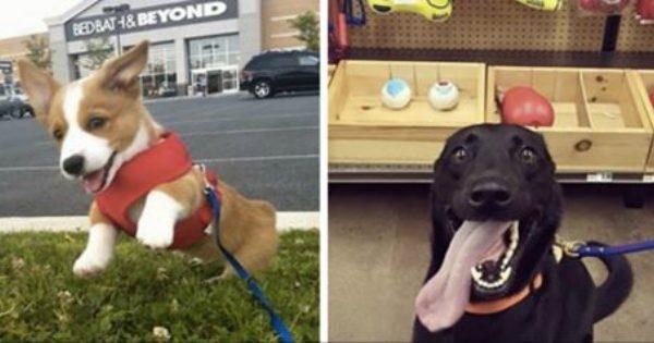 18 Χαρούμενα Σκυλάκια που «Κατουρήθηκαν» από την Χαρά τους μόλις είδαν το Αφεντικό τους. Θα σας Κλέψουν την Καρδιά!