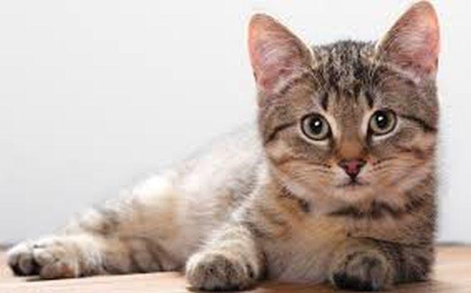 θρίλερ Γάτα Βίντεο