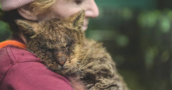 Όλοι σιχαινόντουσαν αυτήν την Γάτα και ΚΑΝΕΙΣ δεν την Άγγιζε. Η αντίδρασή της όταν νιώθει το Ανθρώπινο Χάδι για 1η Φορά; Θα σας Συγκλονίσει!