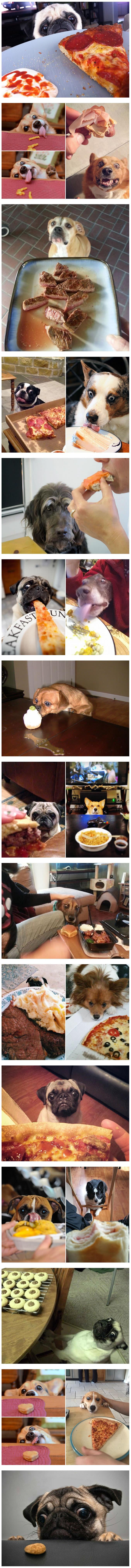 φαγητό Σκύλος σκύλοι
