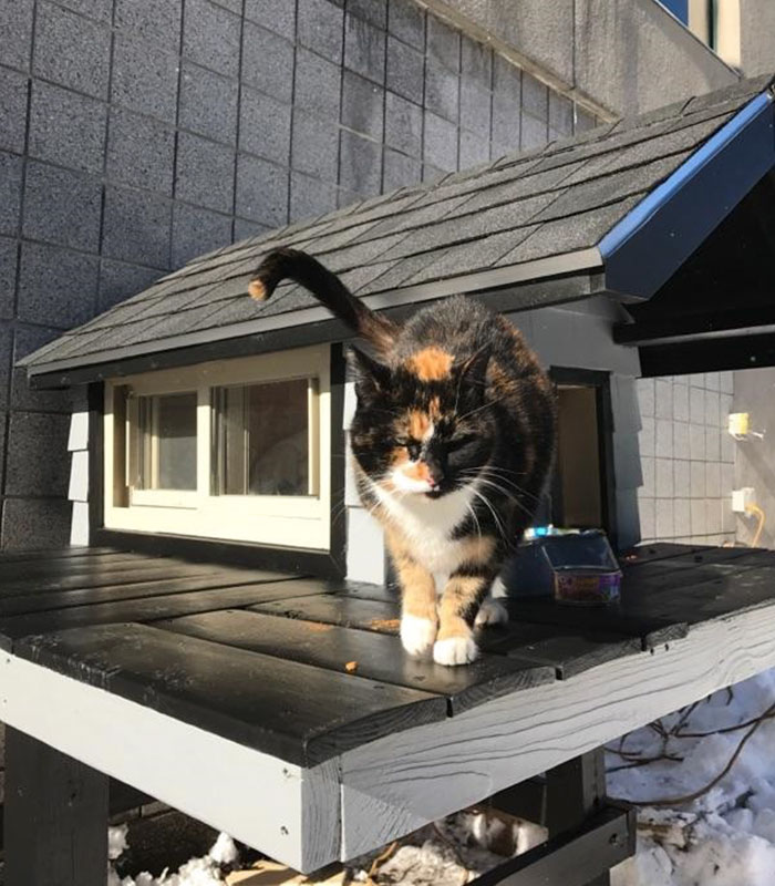Γάτα αδέσποτη γάτα Αδέσποτα