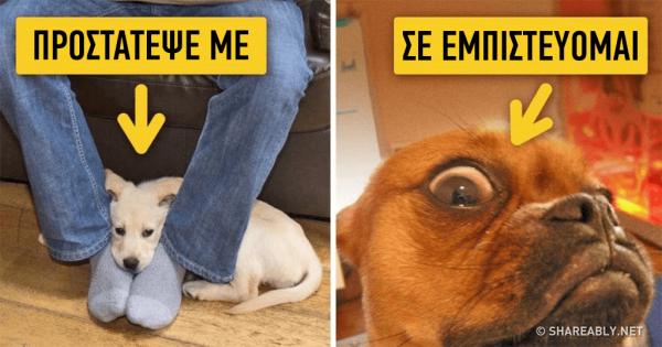 9 τρόποι για να καταλαβαίνετε καλύτερα τον σκύλο σας