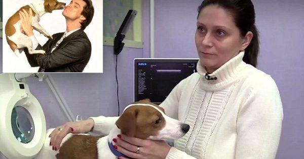 ΝΤΡΟΠΗ! Υποχρέωσε τον Σκύλο της σε Πλαστική Επέμβαση για τον ΠΙΟ Τραγικό λόγο. Μόλις τον Μάθετε, θα Εξοργιστείτε!