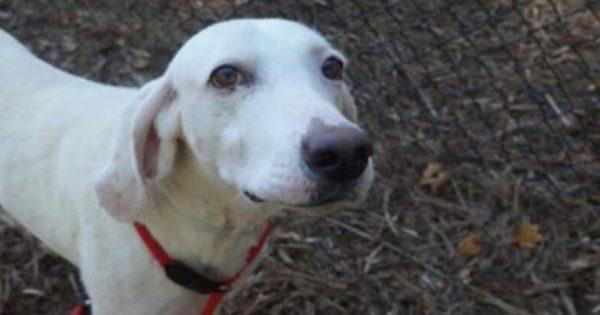 Σκύλος άλλαξε 11 ιδιοκτήτες αλλά ΠΑΝΤΑ επέστρεφε στο Καταφύγιο. Όταν οι Κτηνίατροι Κατάλαβαν ΓΙΑΤΙ το έκανε, έμειναν άφωνοι!